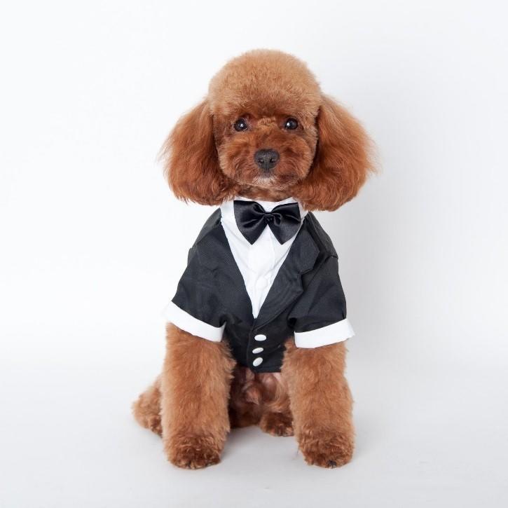 adorable tux puppy