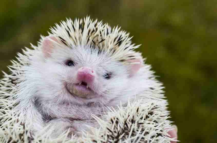The Hedgehog Concept – How to Become a Great Company